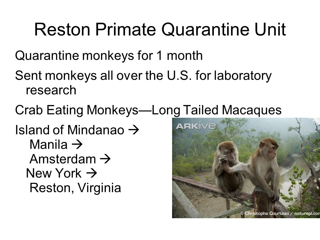 the hot zone the monkey house Reston's hot zone ─ 20 years later the internet journal of preventive medicine 2010 volume 2 number 1  while the cleanout of the monkey house was going on, .