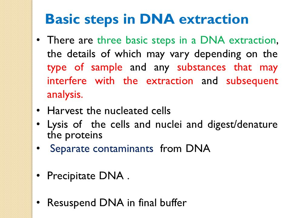 an overview of the dna extraction and analysis of the plant experimentation Separate the cellular components of a plant cell to obtain plant dna dna extraction and standard curve analysis experimentation: standard curve analysis.