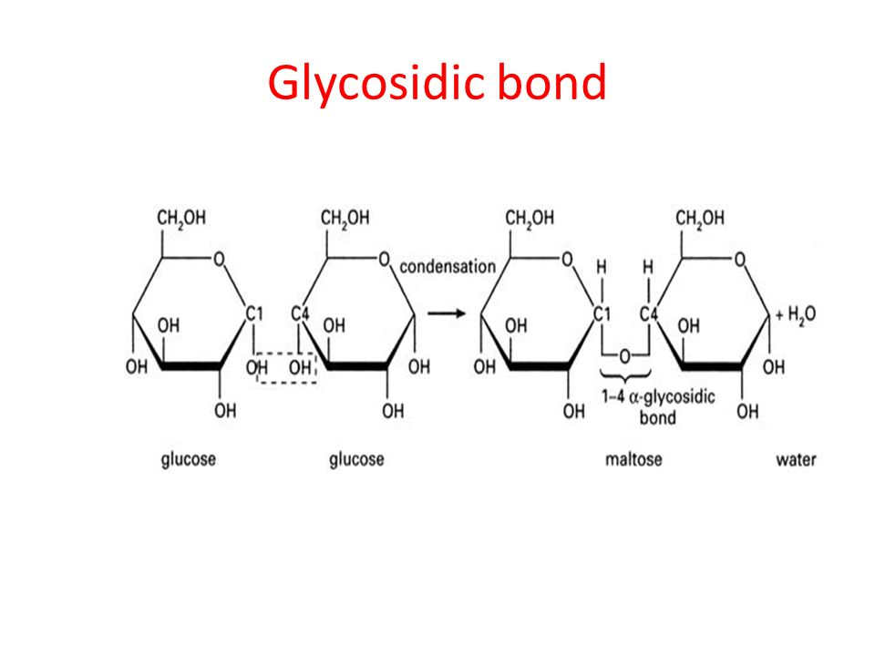 Glycosidic Bond Reaction Pictures To Pin On Pinterest