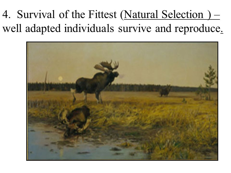 Compare Survival Of The Fittest And Natural Selection