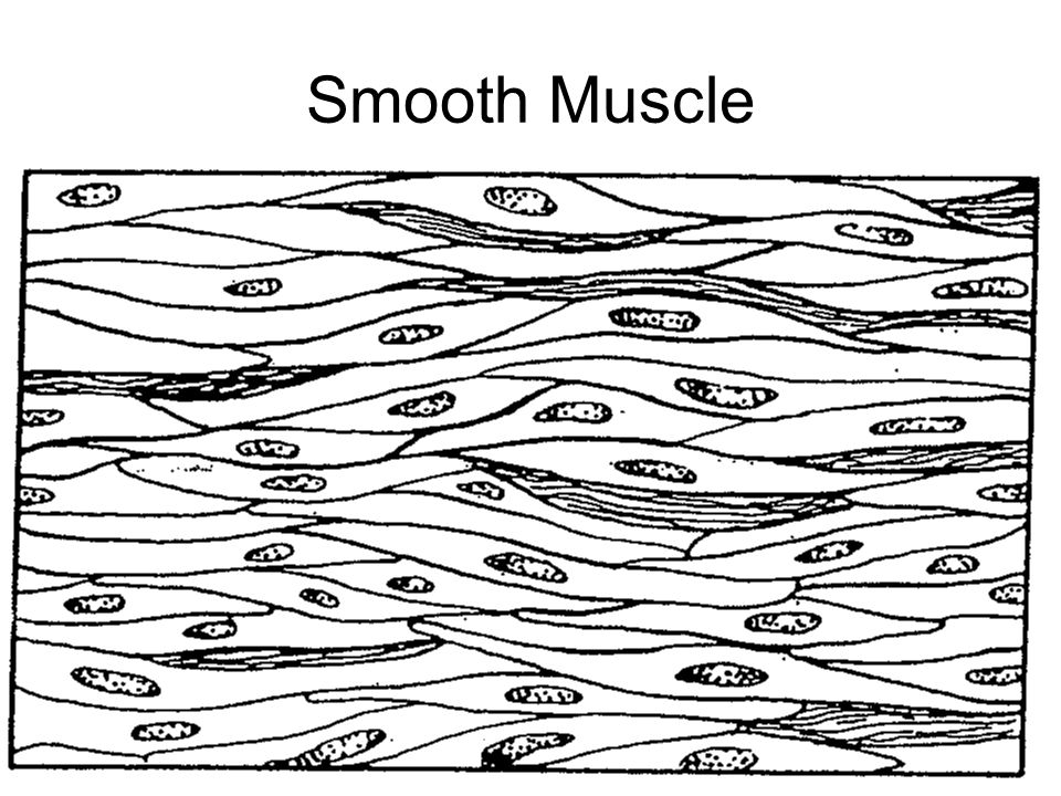Drawing Smooth Lines Review : Lab practical review human biology ppt download