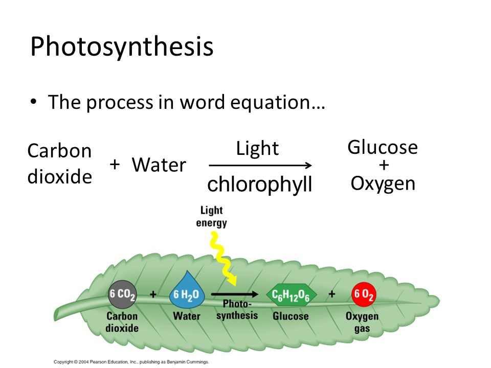 photosythesis word At the leaf level, the dissipation of excitation energy through processes other than photosynthetic c‐metabolism is an important defence mechanism under conditions of water stress and is accompanied by down‐regulation of photochemistry and, in the longer term, of carbon metabolism issue section.