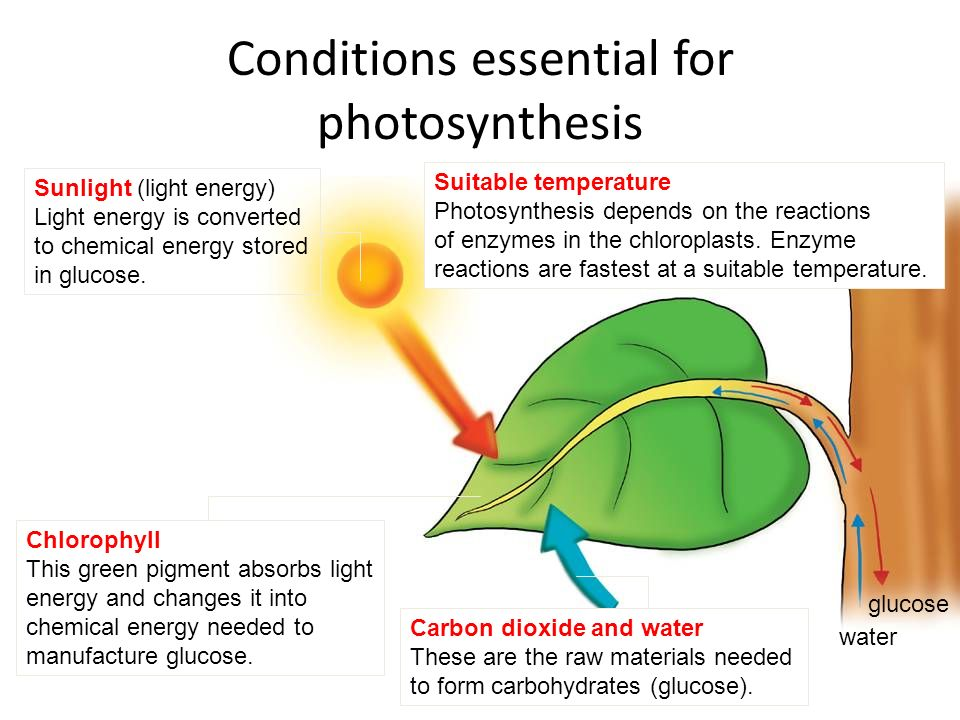 The enhancement of Human Photosynthesis means improvement in quality of life.