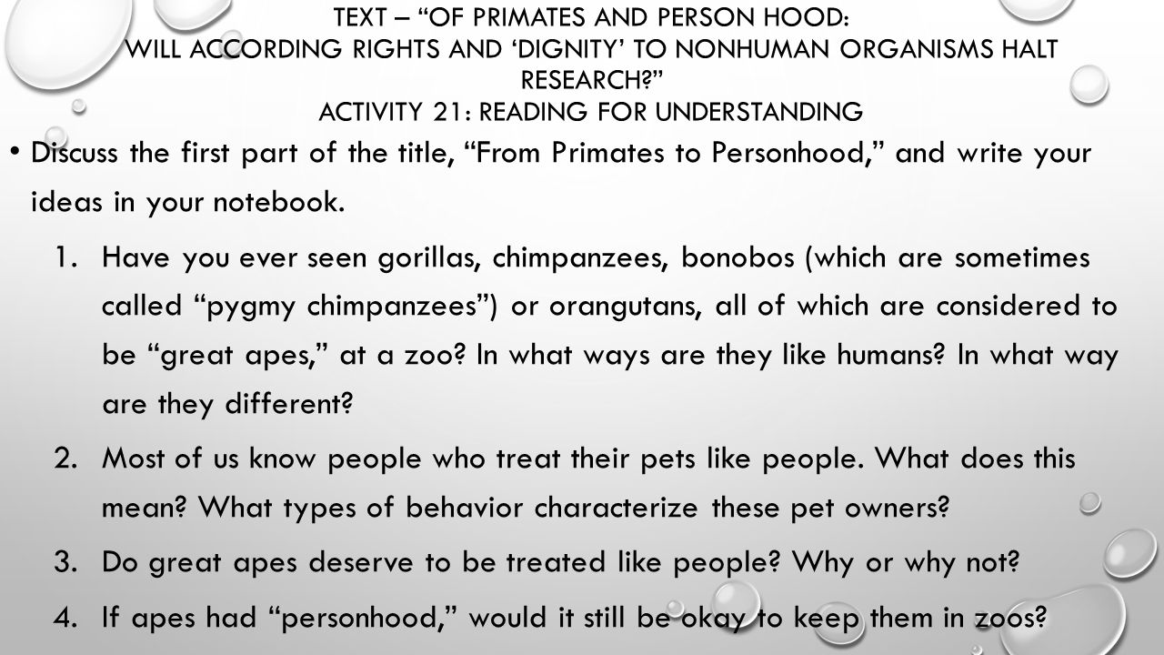 personhood for primates