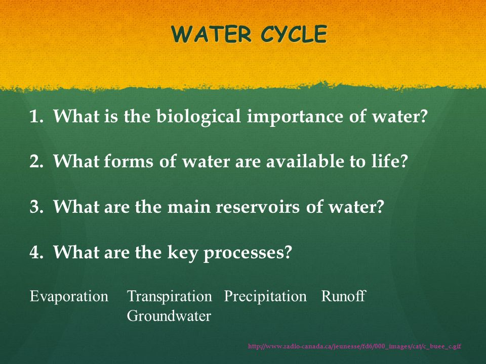 biological importance of water Water scarcity & the importance of water 60 and 95 percent of all living organisms speaks for itself on the incredible biological importance of this.