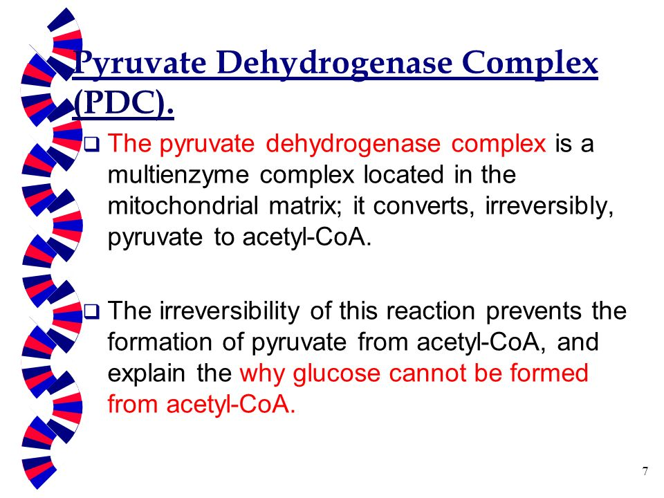 Oxidative Decarboxylation of pyruvate and TCA cycle - ppt video ...