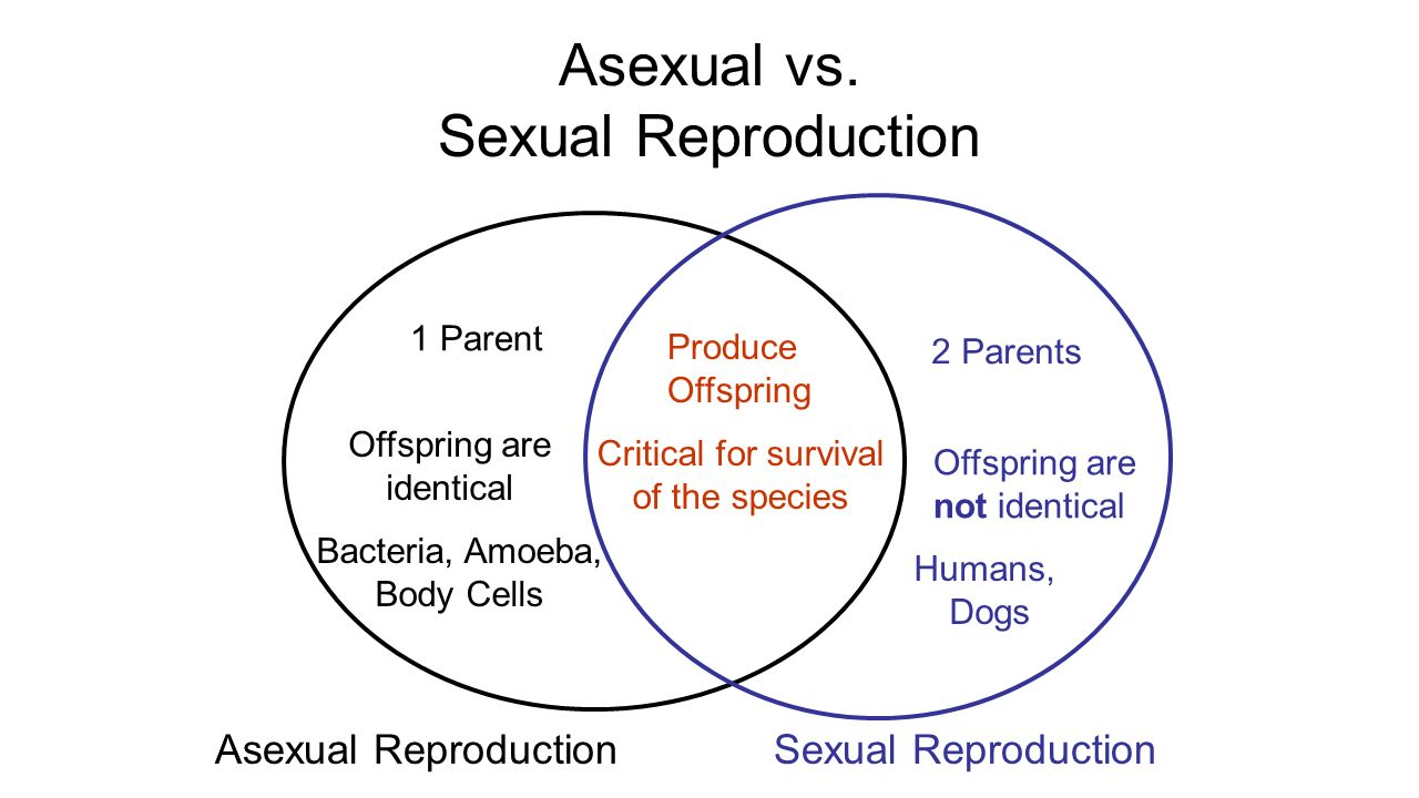 Does Bacteria Reproduce Sexually Or Asexually