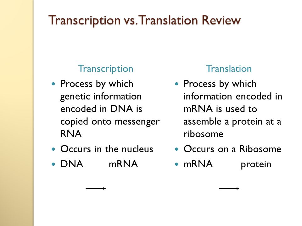 essay on translation and transcription Transcription and translation are how genetic information is transferred and used to create proteins can you describe these processes on the ap bio exam.