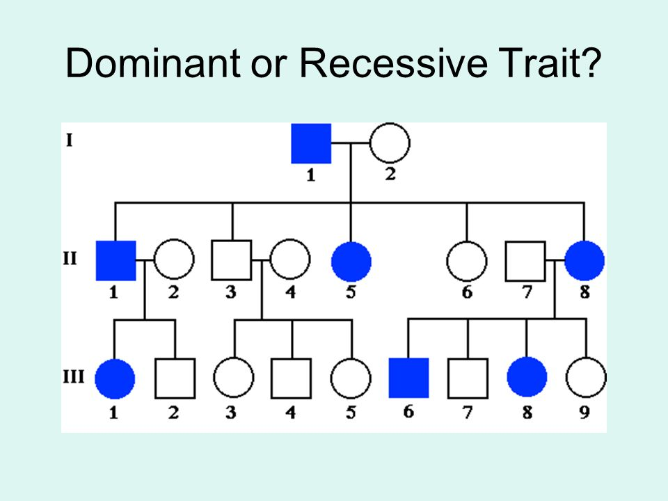 Example of Trait = Albinism - ppt video online download