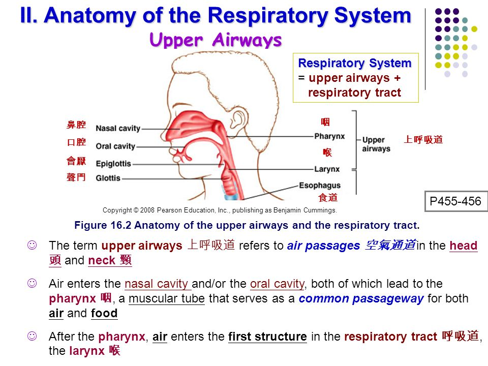 anatomy and physiology of the respiratory A major organ of the respiratory system, each lung houses structures of both the conducting and respiratory zones the main function of the lungs is to perform the exchange of oxygen and carbon dioxide with air from the atmosphere.
