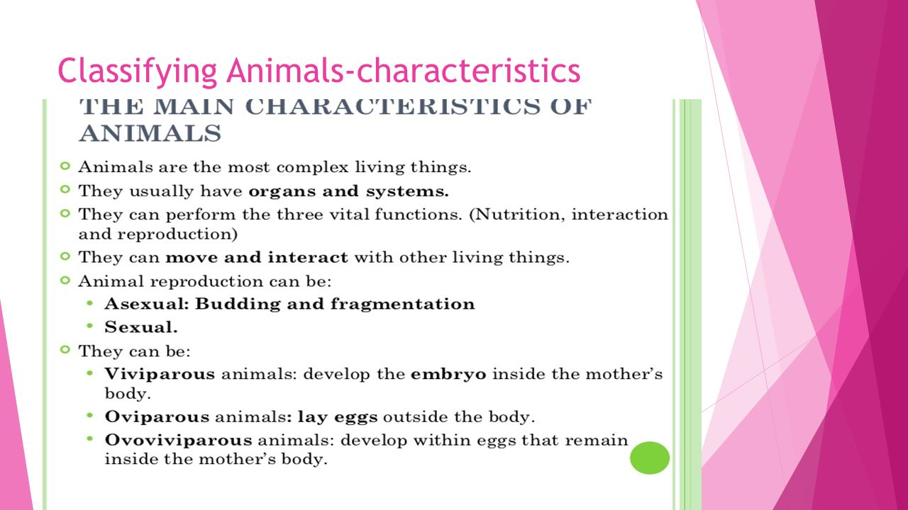 Chapter – 4 Classifying Animals ppt video online