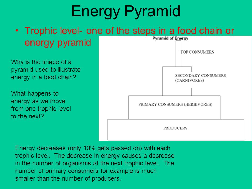 how to draw a energy pyramid
