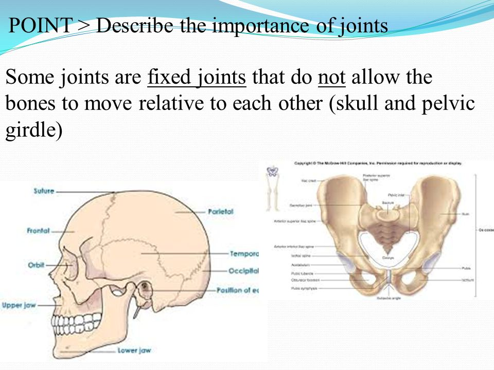alice 3 how to move joints