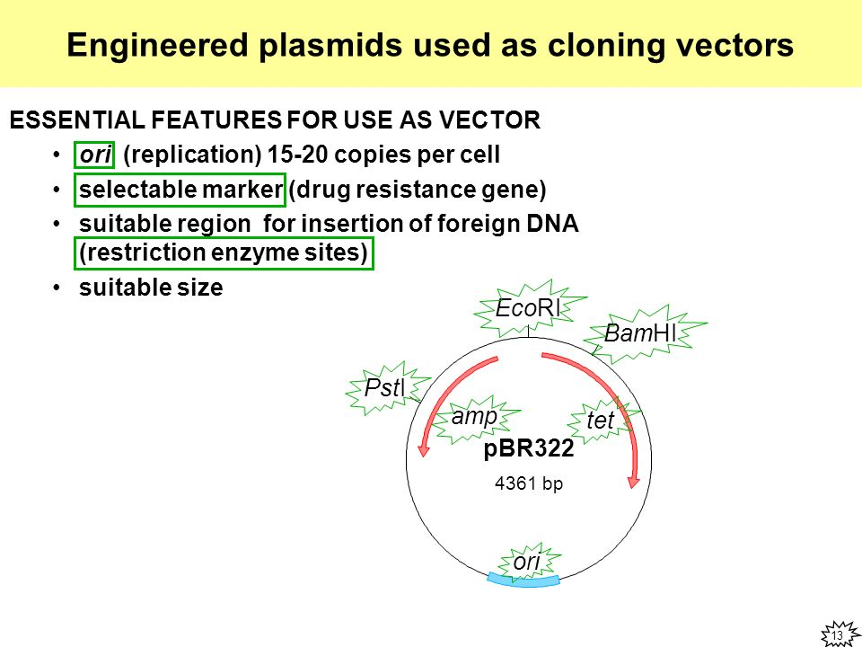 cloning steps using plasmid vector In this video lesson, you will learn about the process of cloning dna, as well   well, let's take a look at the steps involved in the cloning process  plasmids are  ideal to use in cloning for two reasons: they are very versatile and can carry just.