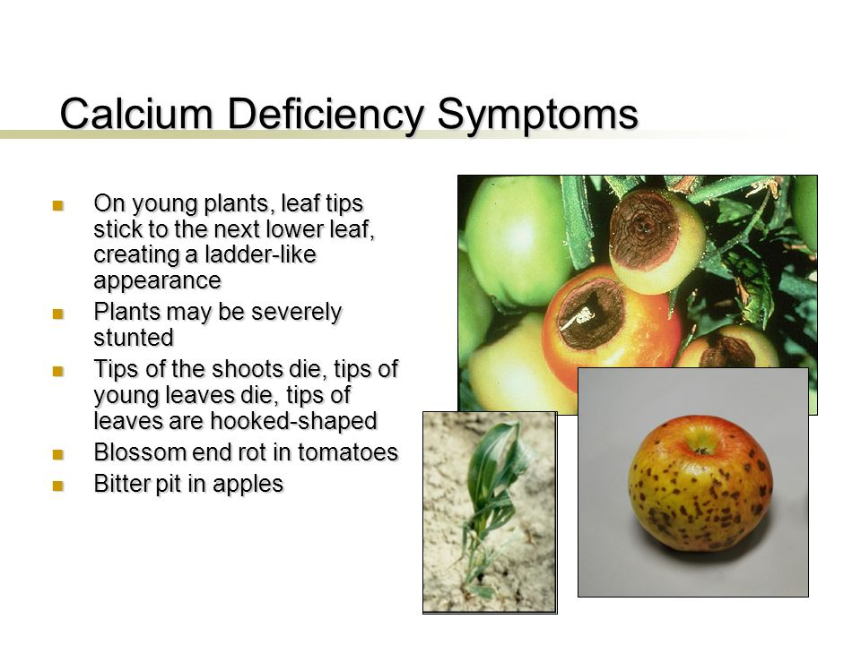 how to fix calcium deficiency in plants