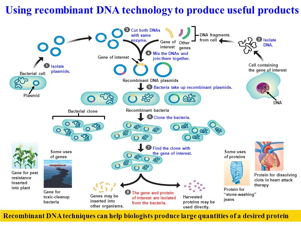Section 13 2 recombinant dna technology worksheet answers
