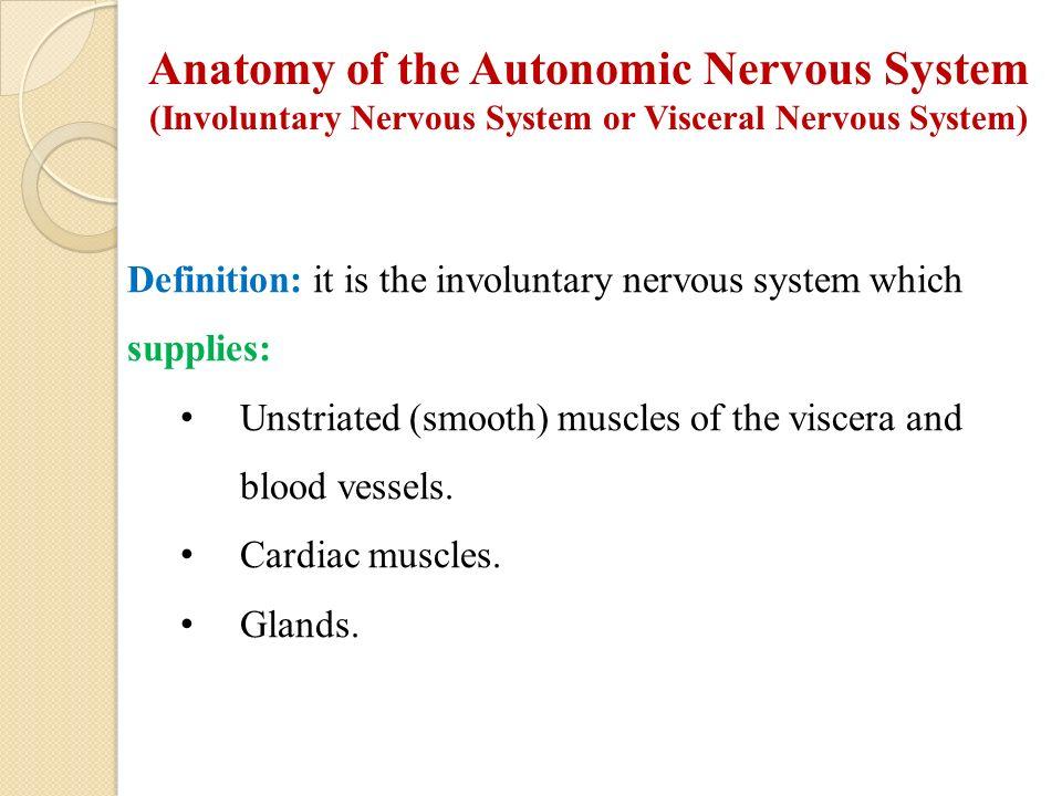 Visceral anatomy definition