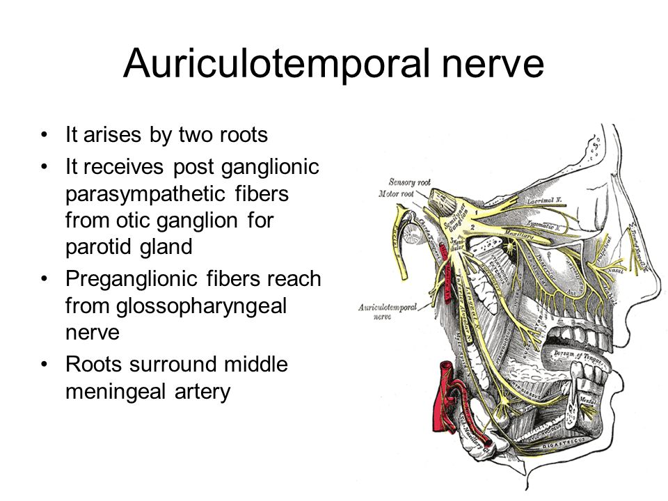 Infratemporal fossa Dr A.Prasanna. - ppt video online download