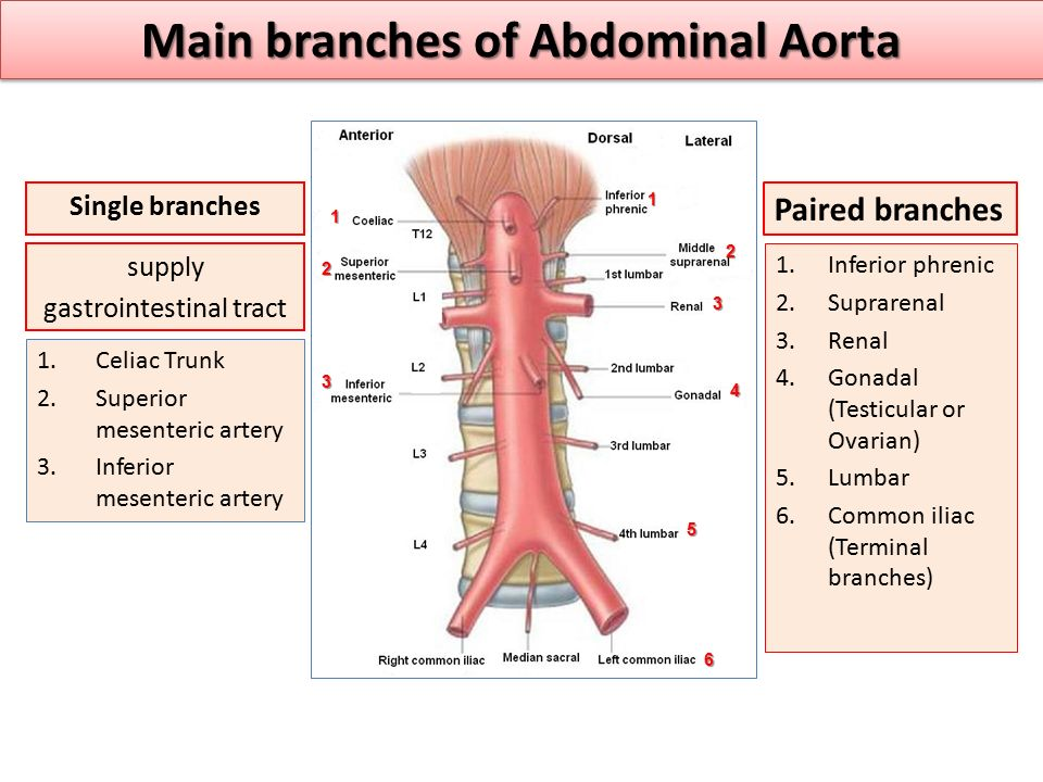 Main branches of Abdominal Aorta