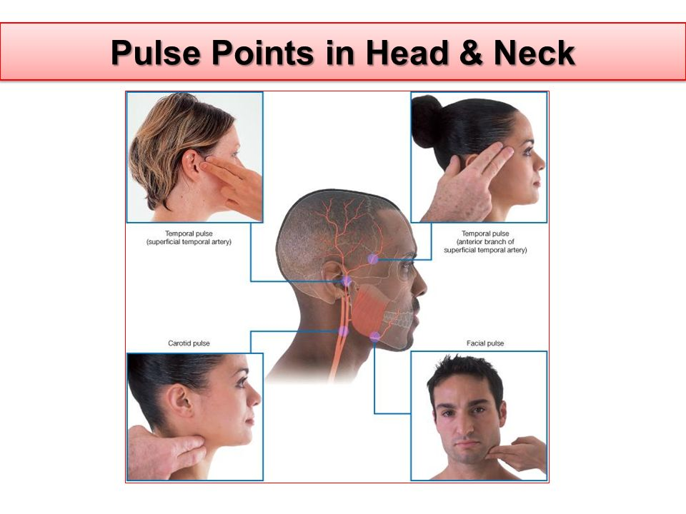 Pulse Points in Head & Neck