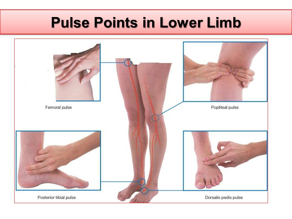 Pulse Points in Lower Limb