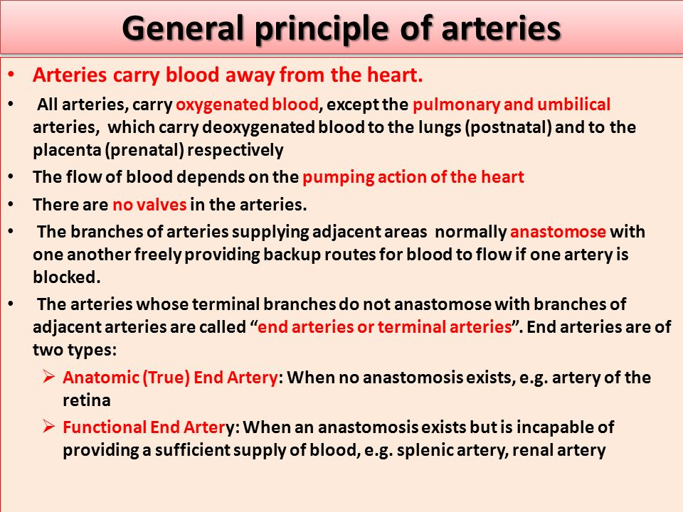 General principle of arteries