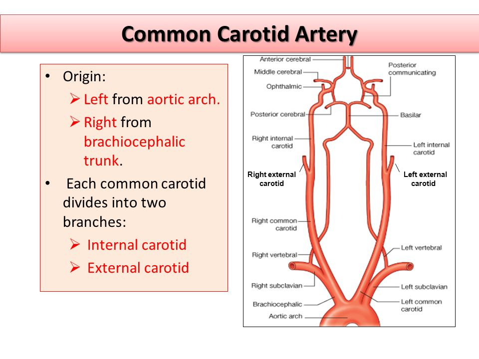 Right external carotid