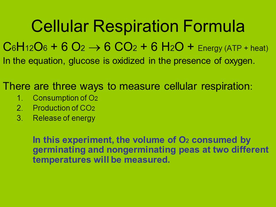 cellular respiration in peas germinating and In plant seeds, the cellular respiration does not occur until the seed has absorbed  moisture and  why do germinating peas undergo cellular respiration.