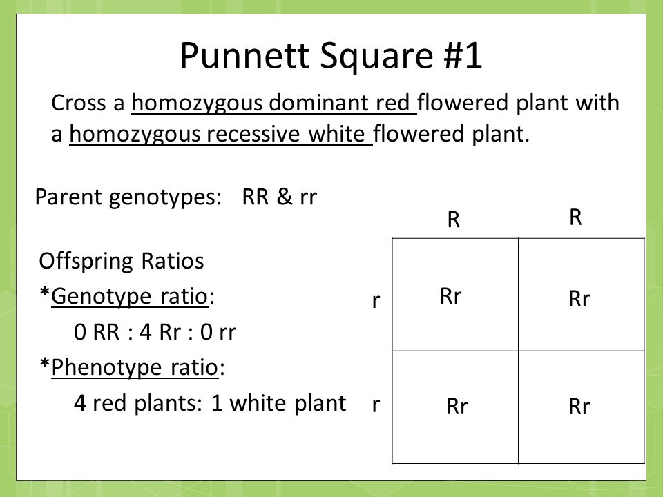 Genetics Part I: Mendel and Basics - ppt video online download