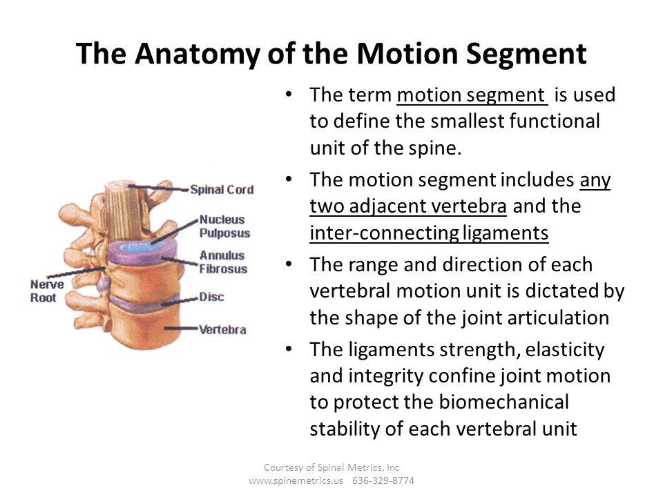 Fantastic The Anatomy Of The Spine Illustration - Human Anatomy ...