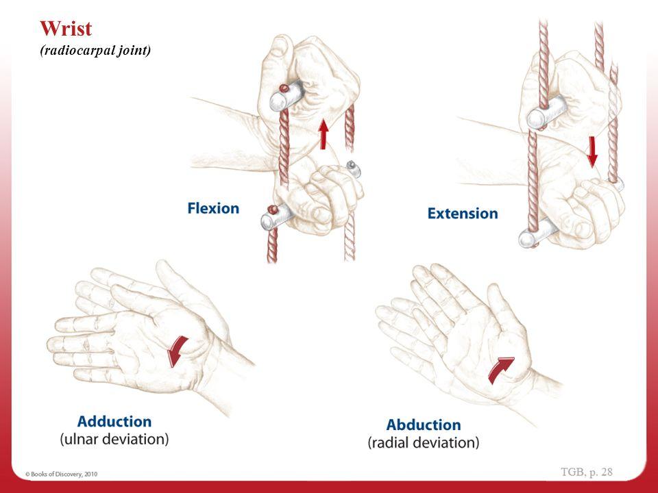 Wrist movements anatomy