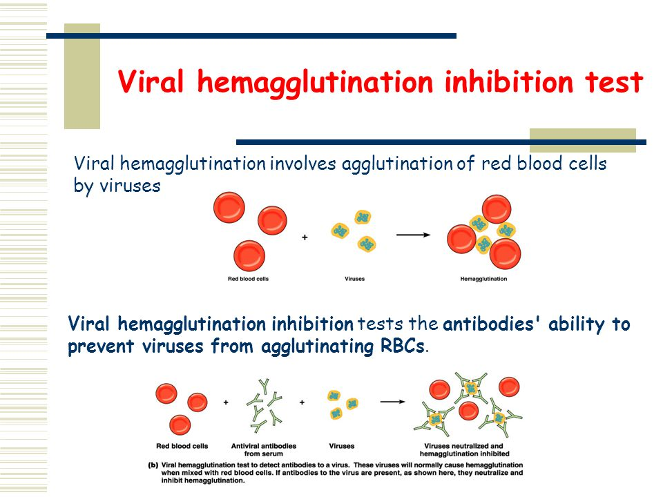 haemagglutination assay