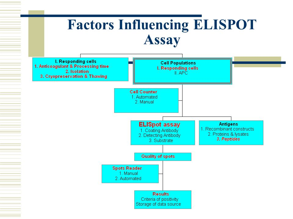 elispot assay ppt