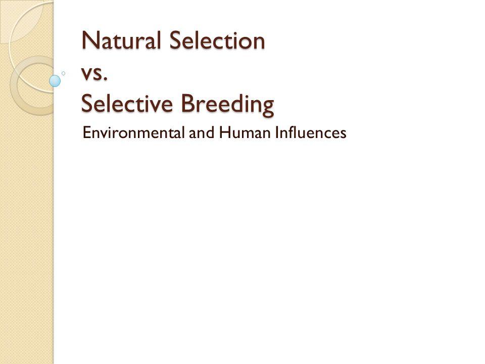 Natural Selection And Selective Breeding Are Similar