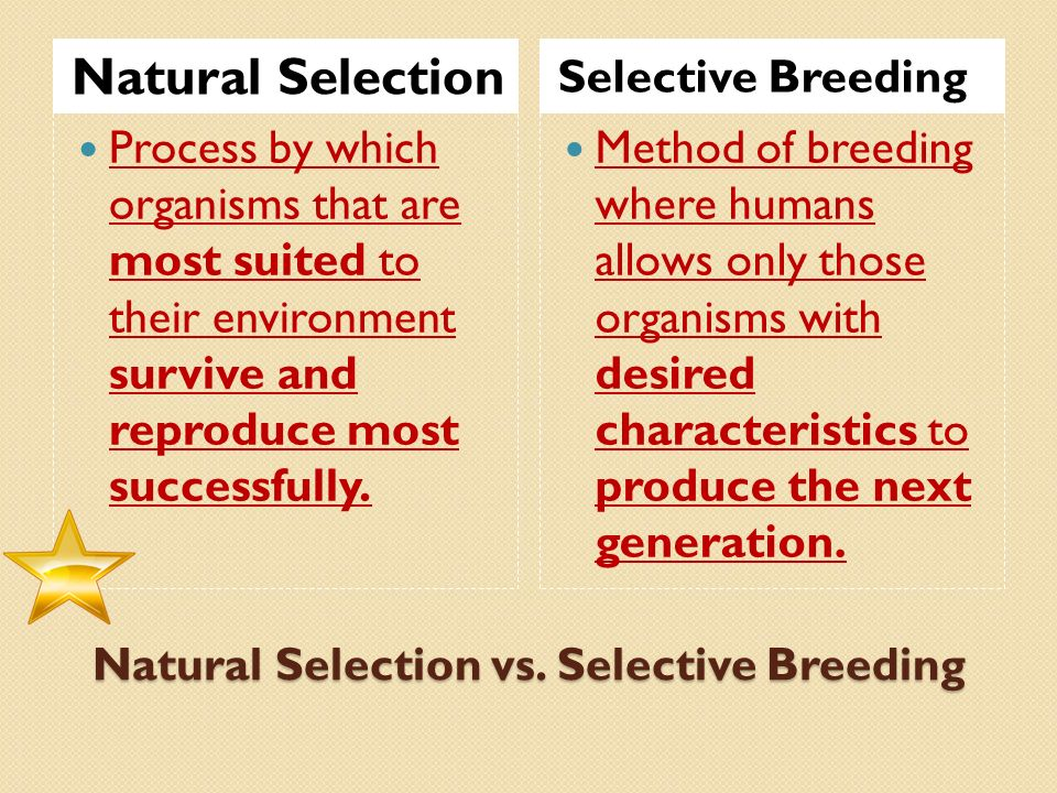 Natural Selection And Selective Breeding Are Similar