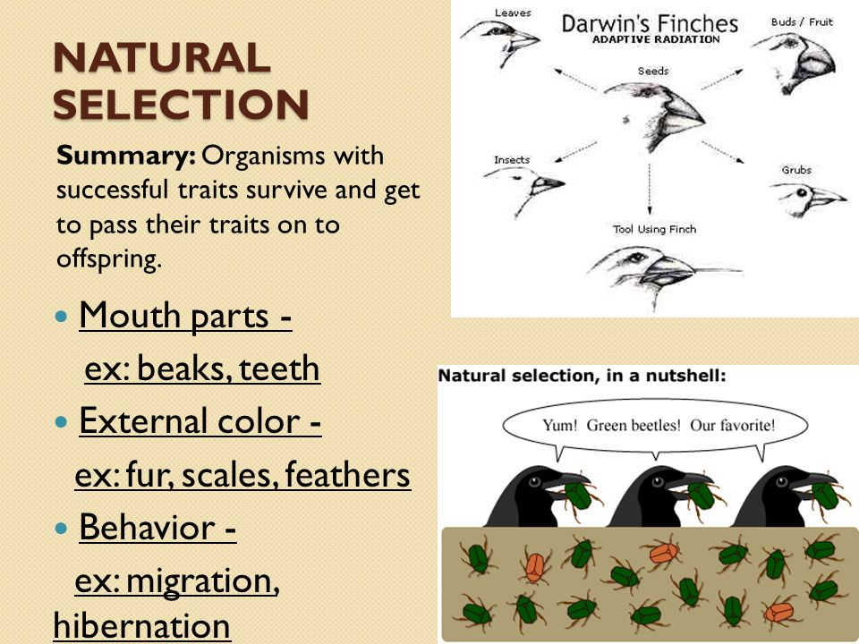 an overview of the government versus environmentalists versus charles darwin Darwinism is the theory proposed by charles darwin regarding the evolution of a species by natural selection this theory states that all species of organisms undergo natural selection and the natural selection will select the species that possess genetic variations.