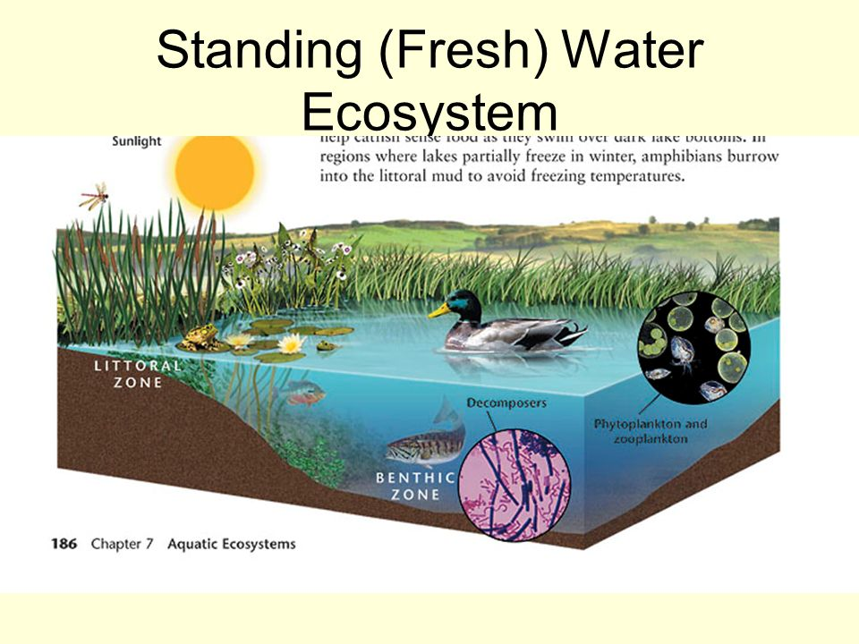 freshwater aquatic systems essay Freshwater ecosystems include some wetlands, streams, rivers, ponds and lakes   coastal ecosystems are areas where land and water join to create an.