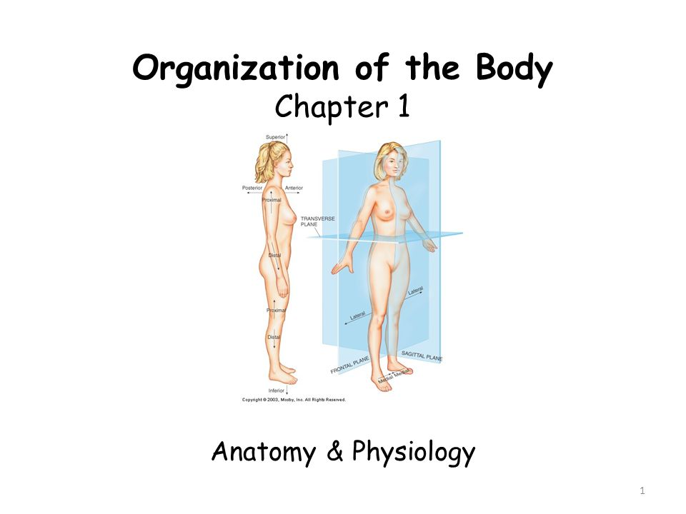 Organization of the Body - ppt video online download