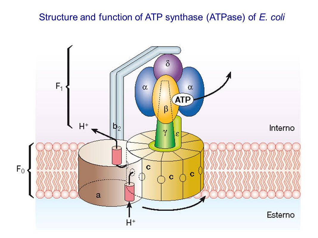 atp structure and function pdf