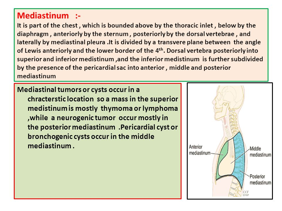 the chest wall & mediastinum - ppt video online download, Human Body
