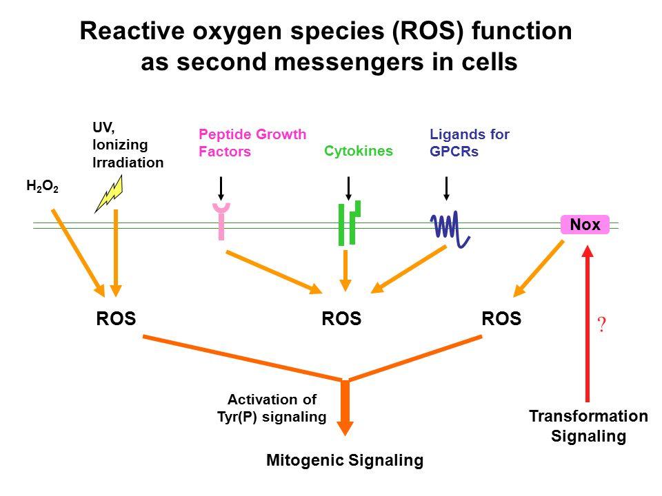 how to produce reactive oxygen species