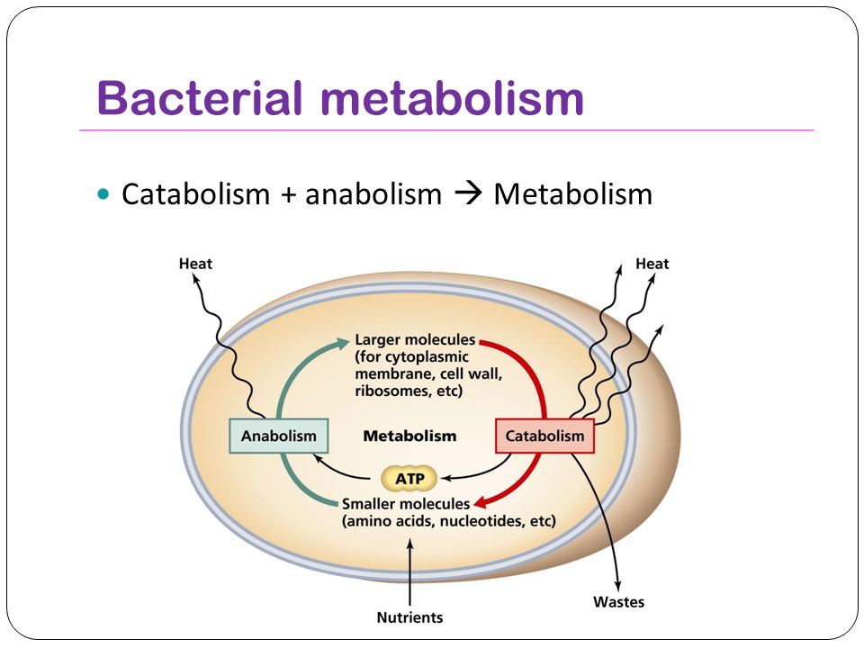 metabolism anabolism and catabolism Anabolism and catabolism are part of the processes involved in metabolism they work together to free and capture energy in your body.