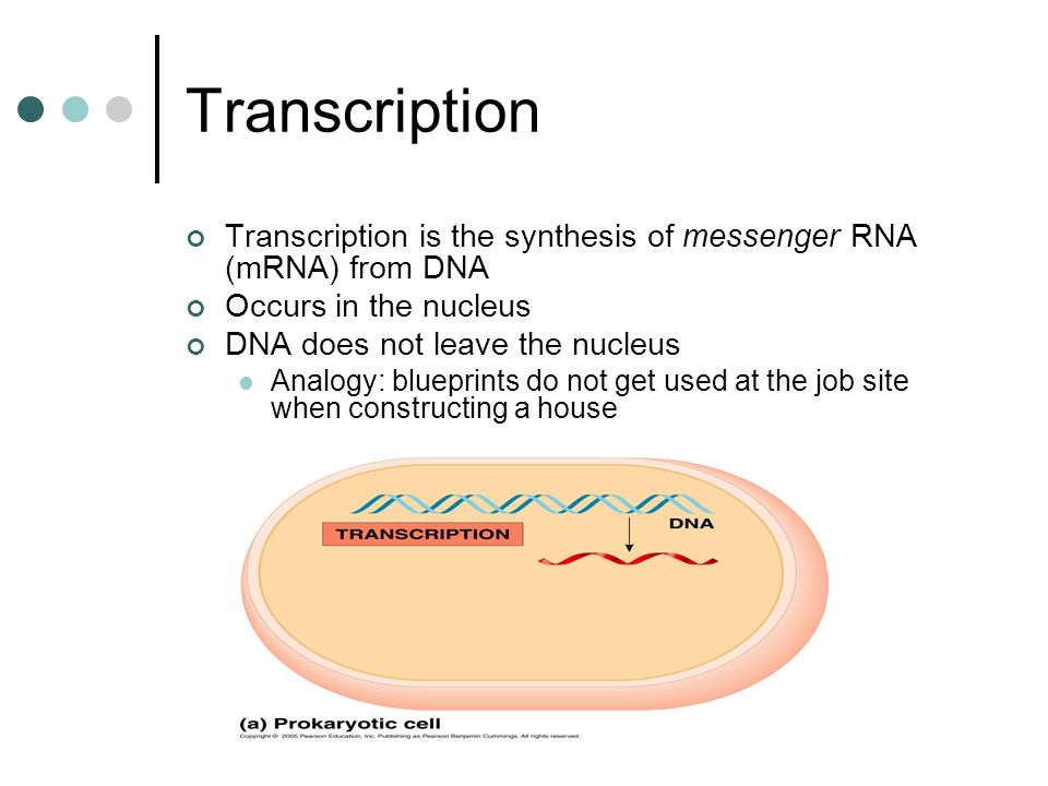 Dna 1 the information carried by a dna molecule is in ppt download transcription transcription is the synthesis of messenger rna mrna from dna occurs in malvernweather Gallery