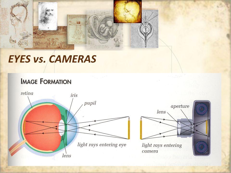 The Eye And The Camera Worksheet - Kidz Activities