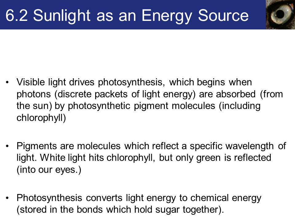 Chapter 6 Where It Starts – Photosynthesis (Sections ) - ppt download