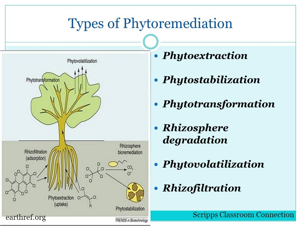 Bioremediation and Phytoremediation: Natural Methods for ...