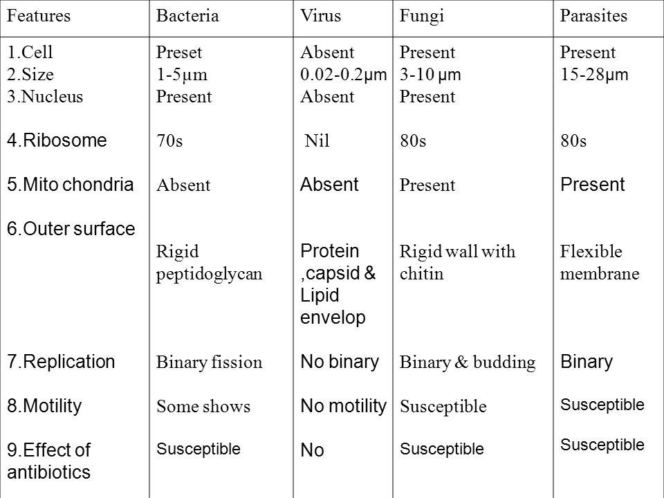 features of bacteria viruses and fungi essay What is the similarity between bacteria and fungi update cancel ad by highbrow  what are some examples of similarities between bacteria and viruses.