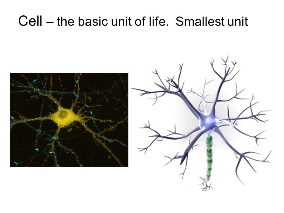 basic unit of life