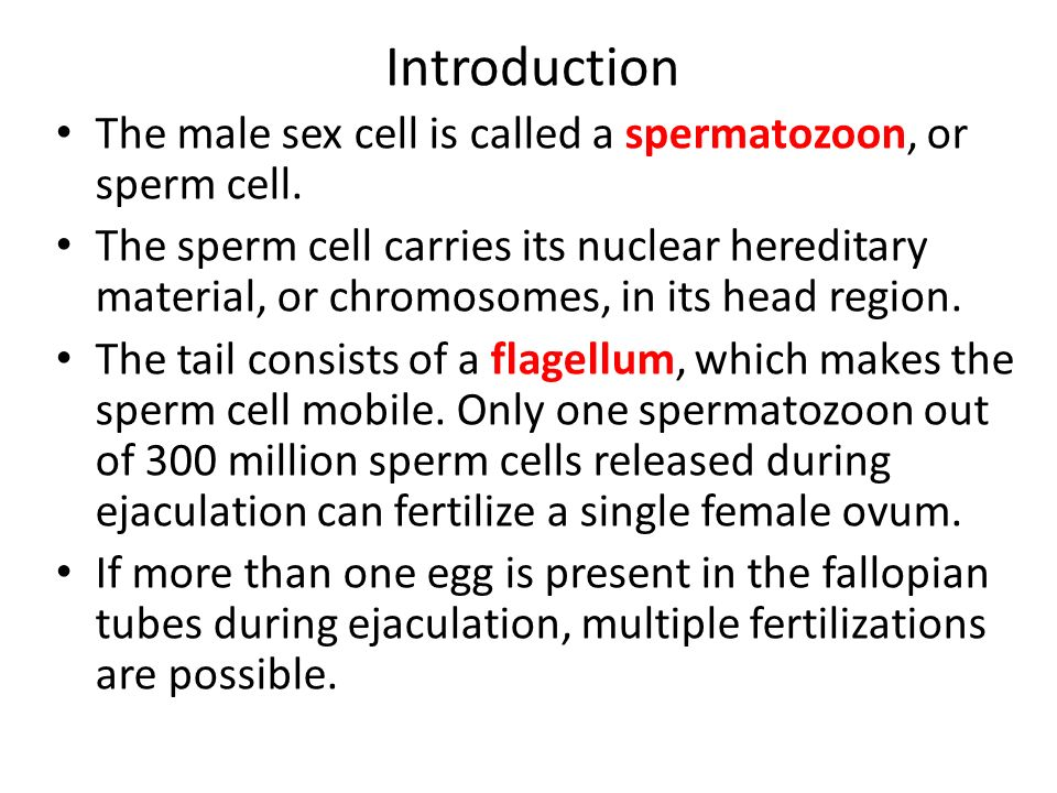 what is the male sex cell called