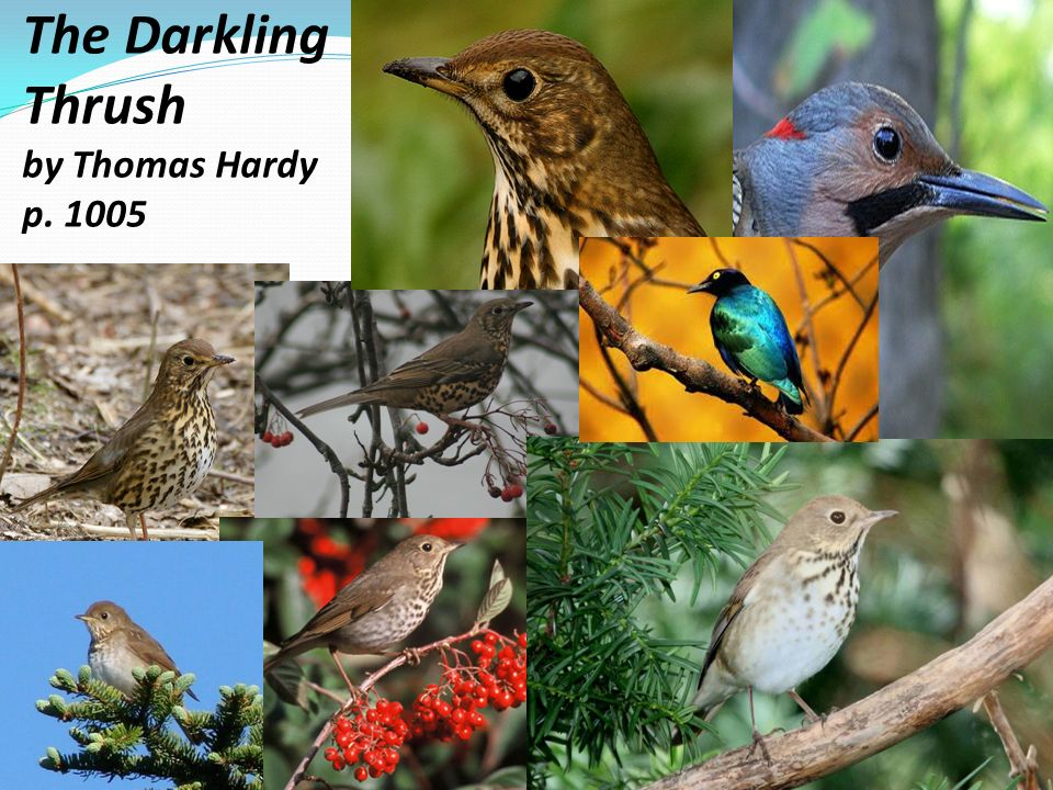"analysis of thomas hardy s the darkling thrush Hardy's the darkling thrush is the basis of hardy's self-designated ""evolutionary meliorism"" hardy has a growing consciousness or awareness of the ' blessed hope' for the future generation."